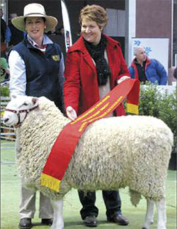 RES_JUN_CHAMP_RAM_BENDIGO_2010.JPG