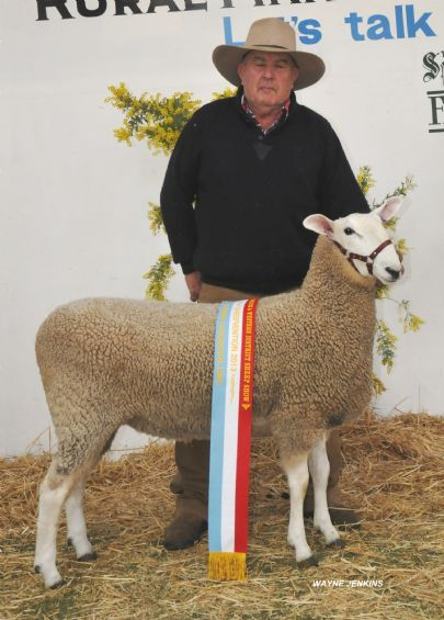 2013 HAMILTON SHEEPVENTION 060 RET.JPG