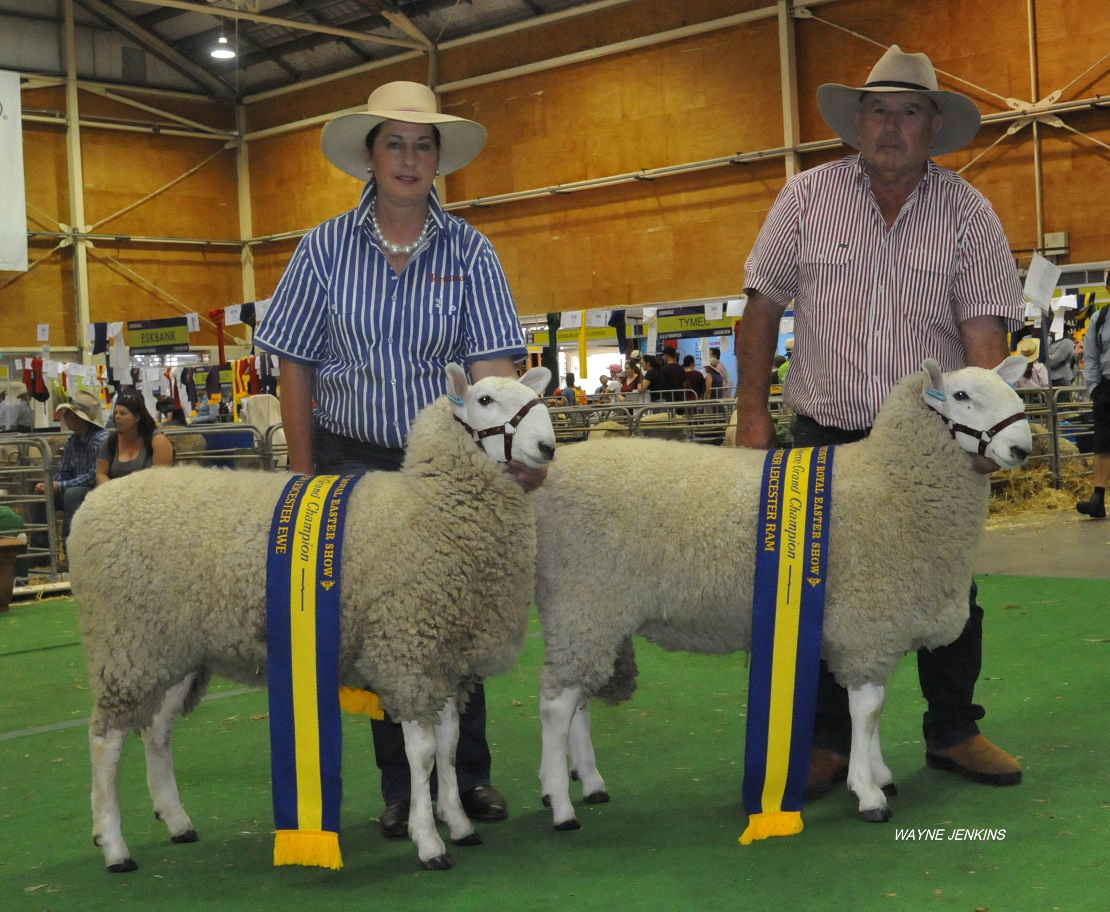 2016_SYDNEY_RETALLACK_JUNIOR_GRAND_CHAMPION_RAM_AND%20EWE.JPG