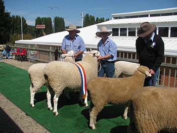 COOMA_2015 INTERBREED EXHIBIT 116.JPG